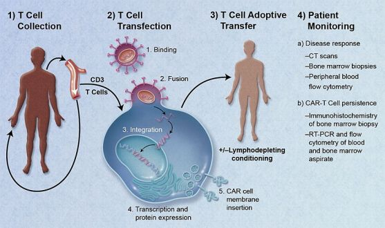 T-Cell_Adoptive_Transfer