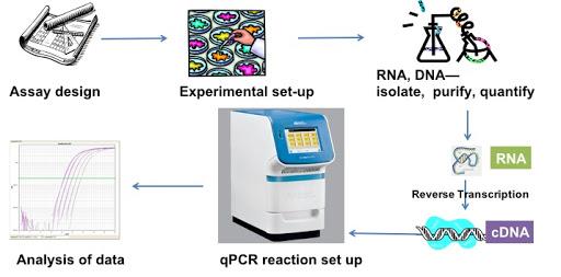 qPCR experiment workflow steps RNA